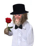 Πίθηκος με το λουλούδι Στοκ Εικόνες