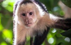 πίθηκος μικρός Στοκ φωτογραφία με δικαίωμα ελεύθερης χρήσης