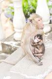 Πίθηκος μωρών και πίθηκος μητέρων, με μακριά ουρά πίθηκος macaque Στοκ Φωτογραφίες