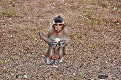 Πίθηκος μωρών που κρατά το φρέσκο καλαμπόκι Στοκ εικόνα με δικαίωμα ελεύθερης χρήσης
