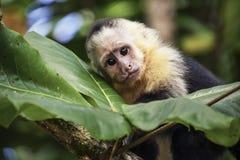 Πίθηκος μωρών στη Κόστα Ρίκα στοκ φωτογραφία με δικαίωμα ελεύθερης χρήσης