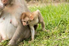 Πίθηκος μωρών στο πάρκο Στοκ φωτογραφία με δικαίωμα ελεύθερης χρήσης
