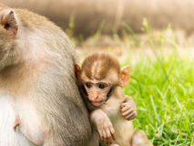 Πίθηκος μωρών στο πάρκο Στοκ εικόνα με δικαίωμα ελεύθερης χρήσης
