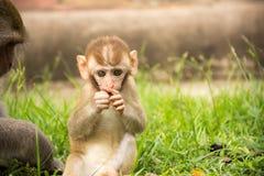 Πίθηκος μωρών στο πάρκο Στοκ Φωτογραφίες