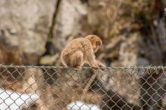 Πίθηκος μωρών στο φράκτη συνδέσεων αλυσίδων Στοκ φωτογραφίες με δικαίωμα ελεύθερης χρήσης