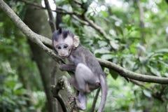 πίθηκος μωρών Στοκ Εικόνα
