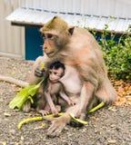 πίθηκος μωρών Στοκ φωτογραφία με δικαίωμα ελεύθερης χρήσης
