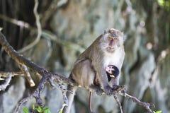 πίθηκος νησιών Στοκ εικόνα με δικαίωμα ελεύθερης χρήσης