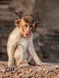 Πίθηκος πορτρέτου Στοκ φωτογραφία με δικαίωμα ελεύθερης χρήσης