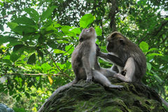 Πίθηκος που καλλωπίζει το συντροφικό πίθηκο στοκ εικόνα