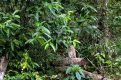 Πίθηκος που περιμένει τον τουρίστα στο δέντρο Στοκ εικόνες με δικαίωμα ελεύθερης χρήσης