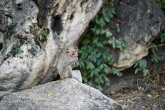 Πίθηκος που τρώει τα τρόφιμα στο έδαφος, πίθηκος Ταϊλάνδη Στοκ Φωτογραφία