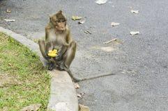 Πίθηκος που τρώει jackfruit την έννοια δοχείων απορριμμάτων Στοκ φωτογραφία με δικαίωμα ελεύθερης χρήσης