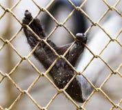 Πίθηκος ποδιών σε ένα κλουβί στο ζωολογικό κήπο Στοκ φωτογραφία με δικαίωμα ελεύθερης χρήσης