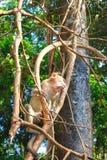 Πίθηκος σε ένα δέντρο Στοκ εικόνα με δικαίωμα ελεύθερης χρήσης