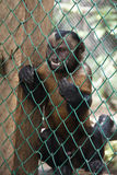 0 πίθηκος σε ένα κλουβί Στοκ Φωτογραφίες