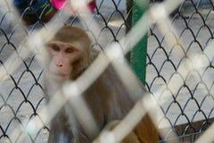 Πίθηκος σε ένα κλουβί Στοκ εικόνες με δικαίωμα ελεύθερης χρήσης