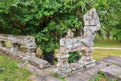 Πίθηκος σε Angkor Wat στην Καμπότζη Στοκ εικόνες με δικαίωμα ελεύθερης χρήσης