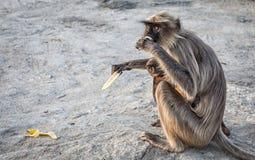 Πίθηκος σε Hampi Στοκ Εικόνες