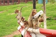 Πίθηκος σε Phra Prang Sam Yod σε Lopburi Ταϊλάνδη Στοκ Φωτογραφίες