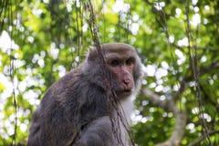 Πίθηκος σε Shoushan, βουνό πιθήκων σε Kaohsiung πόλη-6 Στοκ Εικόνες