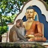 Πίθηκος σε Swayambhunath Stupa Ναός πιθήκων Νεπάλ, Κατμαντού Στοκ Εικόνες