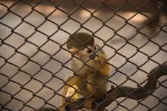 Πίθηκος σκιούρων στο κλουβί Στοκ φωτογραφία με δικαίωμα ελεύθερης χρήσης