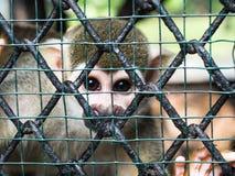 Πίθηκος σκιούρων στο κλουβί Στοκ Φωτογραφία