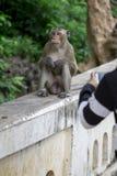 Πίθηκος στην επαρχία Phetchaburi σπηλιών Khao Luang Στοκ φωτογραφίες με δικαίωμα ελεύθερης χρήσης