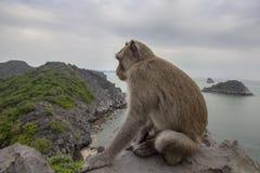 Πίθηκος στην κορυφή υποστηριγμάτων του κόλπου του τοπικού LAN εκτάριο σεναρίου παραλιών νησιών, προορισμός ορόσημων, νησιά BA γατ στοκ εικόνα με δικαίωμα ελεύθερης χρήσης