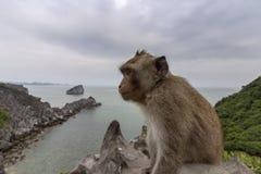 Πίθηκος στην κορυφή υποστηριγμάτων του κόλπου του τοπικού LAN εκτάριο σεναρίου παραλιών νησιών, προορισμός ορόσημων, νησιά BA γατ στοκ φωτογραφίες με δικαίωμα ελεύθερης χρήσης