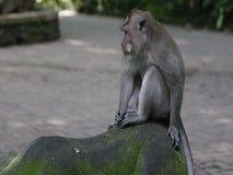 Πίθηκος στη ζούγκλα απόθεμα βίντεο