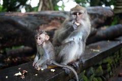 Πίθηκος στη ζούγκλα στοκ φωτογραφία με δικαίωμα ελεύθερης χρήσης