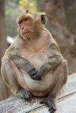 Πίθηκος στη φύση της Ταϊλάνδης Στοκ φωτογραφίες με δικαίωμα ελεύθερης χρήσης