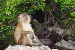 Πίθηκος στη φύση Στοκ Εικόνα