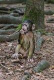 Πίθηκος στο δάσος Στοκ φωτογραφία με δικαίωμα ελεύθερης χρήσης