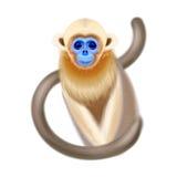 Πίθηκος στο άσπρο υπόβαθρο στοκ εικόνα με δικαίωμα ελεύθερης χρήσης