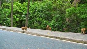 Πίθηκος στο δάσος από το δρόμο απόθεμα βίντεο