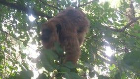Πίθηκος στο δέντρο στοκ εικόνες