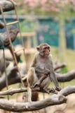 Πίθηκος στο ζωολογικό κήπο στοκ φωτογραφίες
