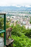 Πίθηκος στο Κατμαντού. Νεπάλ Στοκ Εικόνες