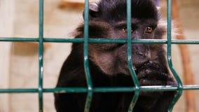 Πίθηκος στο κλουβί απόθεμα βίντεο