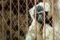 Πίθηκος στο κλουβί στο αγρόκτημα κροκοδείλων Samut Prakan και το ζωολογικό κήπο, Ταϊλάνδη Στοκ Εικόνα