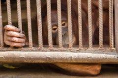 Πίθηκος στο κλουβί στο αγρόκτημα κροκοδείλων Samut Prakan και το ζωολογικό κήπο, Ταϊλάνδη Στοκ Εικόνες