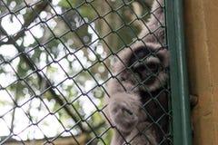 Πίθηκος στο κλουβί στο πάρκο ζωολογικών κήπων του Μπαλί, Ινδονησία Στοκ Φωτογραφία