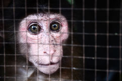 Πίθηκος στο κλουβί Στοκ εικόνα με δικαίωμα ελεύθερης χρήσης
