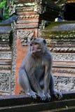Πίθηκος στο ναό Στοκ φωτογραφίες με δικαίωμα ελεύθερης χρήσης