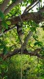 Πίθηκος στο νησί poda Στοκ εικόνα με δικαίωμα ελεύθερης χρήσης