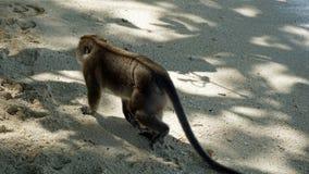 Πίθηκος στο νησί poda Στοκ εικόνες με δικαίωμα ελεύθερης χρήσης