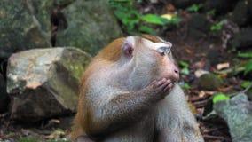 Πίθηκος στο τροπικό δάσος στους βράχους απόθεμα βίντεο